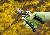 Pruning shrubs — Stock Photo