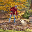 Raking leaves — 图库照片