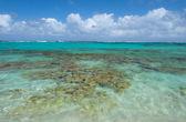 Aguas del caribe — Foto de Stock
