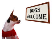 Dogs Allowed Sign Showing Doggie Friendly Hotel — Stock Photo