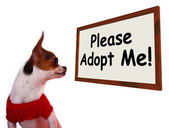 Please Adopt Me Sign Showing Stray Unwanted Canine — Stock Photo