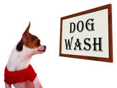 Dog Wash Sign Showing Canine Grooming Washing Or Shampoo — Stock Photo