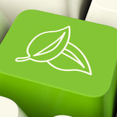 Leaves Icon Computer Key In Green Showing Recycling And Eco Frie — Stock Photo