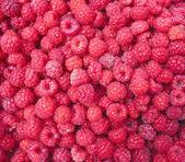 Raspberry close up - berry background — Stock Photo