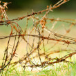 Barbed wire over green grass - Stock Photo