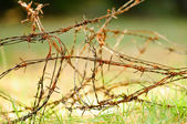 Barbed wire over green grass — Stock Photo