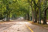 Pathway in the park at spring — Stock Photo