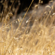 Stock Photo: Dry plant closeup against blurry background