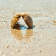 Closeup of a sea shell on wet sand - Stock Photo
