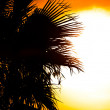 Beautiful summer background with the silhouette of a palm, tree — Stock Photo #8801036