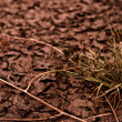 Dry soil closeup before rain with plant — Zdjęcie stockowe