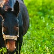 Royalty-Free Stock Photo: Closeup photo of a young horse against green background