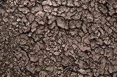 Zbliżenie suchej gleby przed deszczem — Zdjęcie stockowe