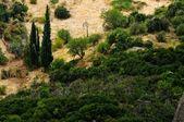 Floresta não cultivada nas montanhas — Foto Stock
