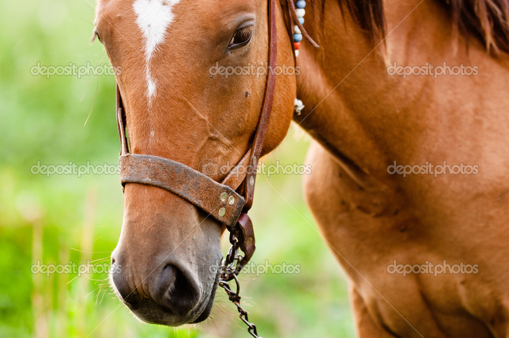 Closeup photo of a young horse against green background  Stock Photo #8801563