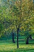 在公园里的树 — 图库照片