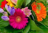 Colorful flowers bouquet — Stok fotoğraf