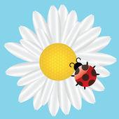 Ladybird on Daisy on blue background. vector illustration — Stock Photo