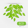Eco leves background. vector illustration — Stockfoto