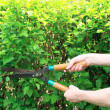 Hands are cut bush clippers — Stock Photo #9605942