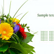 Colorful flowers bouquet isolated on white background. — Stock Photo #9931964
