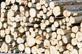Big wooden wall of timber outdoors — Stock Photo