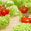 Fresh salad with tomatoes — Stock fotografie