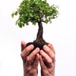 Hands holding a Bonsai tree — Stock Photo #8053643