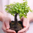 Hands holding a Bonsai tree — Stock Photo #8053646