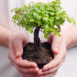 Hands holding a Bonsai tree — Stock Photo #8054350