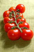 Red cherry tomatoes on the vine — Stock Photo
