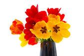 Verse tulpen — Stockfoto