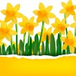 Yellow spring flower background with ripped paper Vector illustration — Stock Vector