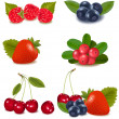 Big group of fresh berries. — Stock Vector #10042097