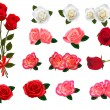 Set of a beautiful roses on a white background. Vector. — Vector de stock  #10042298