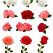 Group of a beauty roses. Vector illustration. — Stock Vector