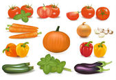 The big colorful group of vegetables. Photo-realistic vector. — Stock Vector