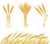 Ripe yellow wheat ears — Stock Vector