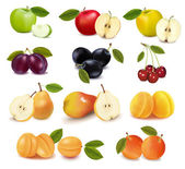 Big group of different fresh fruit. — Stock Vector
