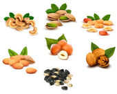 Big collection of ripe nuts Vector — Stock Vector