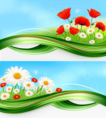 Nature backgrounds with summer colorful flowers Vector — Stock Vector