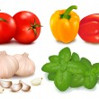 The colorful group of vegetables. Vector illustration. - Stock Vector