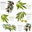 Set of backgrounds with green and black olives. Vector illustration - Stock Vector