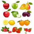 Big group of different fruit. Vector. — Stock Vector #8876284