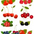 Big group of fresh berries. Vector. — Stock Vector