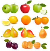 Big group of different fresh fruit. Vector. — Vettoriale Stock