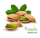 Pistachio with leaves. Vector — Stock Vector