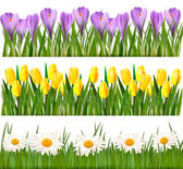 Fresh spring and daisy borders Vector — Stock Vector