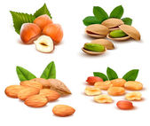 Big collection of ripe nuts Vector — Vecteur
