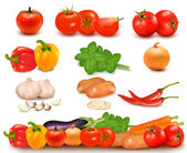 The big colorful collection of vegetables and vegetable design border. Vector. — Vector de stock